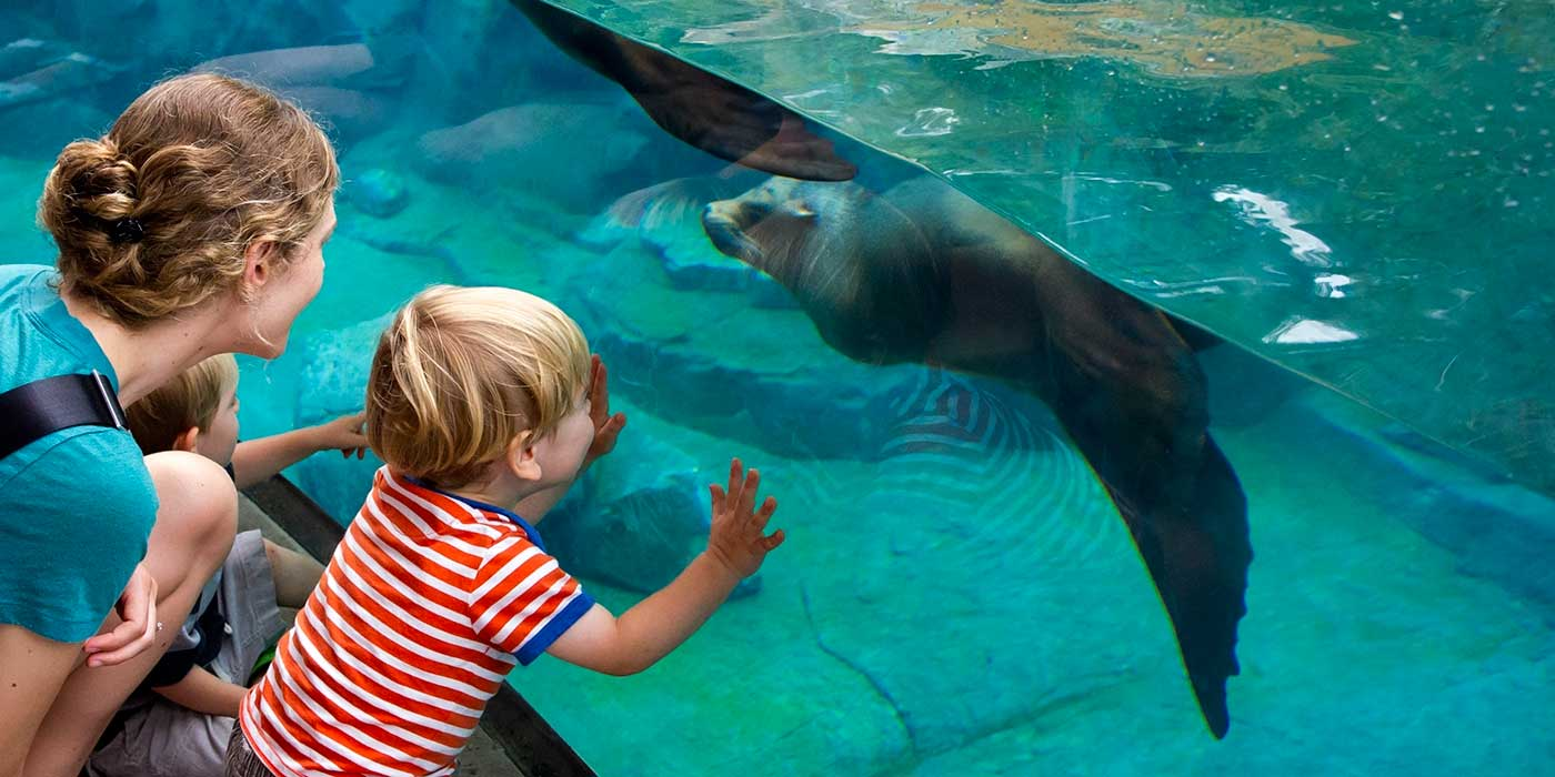 woman with two children looking at seal through glass